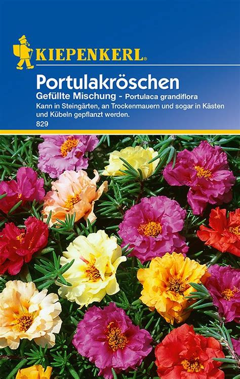 portulak pflanzen kaufen sonstige sommerblumen portulakr 246 schen gef 252 llte mischung