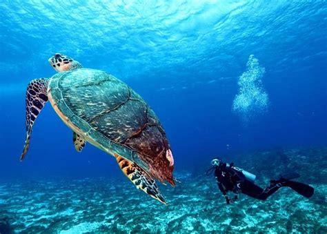 Cozumel Dive 97e5630d331fdc3b743ec8923dc4a946 Large Jpg Picture Of