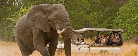Luxury African Safari: African Safari Tours   Abercrombie