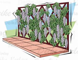 Terrasse Tiefer Als Garten : garten und terrasse blauregen als rankpflanze garten pflanzen flora fauna themen ~ Bigdaddyawards.com Haus und Dekorationen