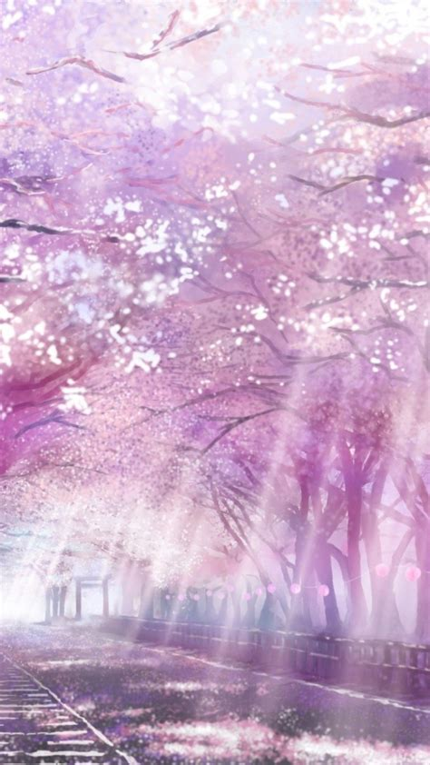 Anime Cherry Blossom Wallpaper - cherry blossoms anime scenery wallpapers top free cherry
