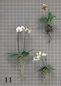 Gewächshaus Erde Wechseln : orchideen wurzeln beschneiden nachher garten ~ Whattoseeinmadrid.com Haus und Dekorationen
