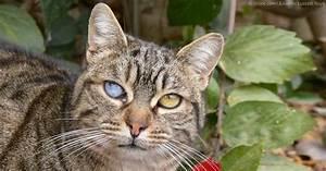 Toxoplasmosis In Cats Eyes | www.pixshark.com - Images ...