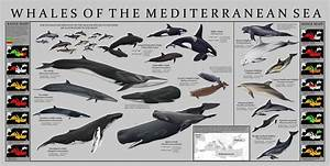 Pin By Paiu Marian On Cetaceans
