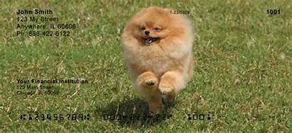Pomeranian Checks Personal