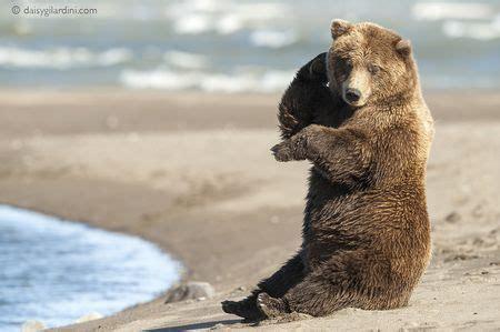 Brown Bear Weight Range