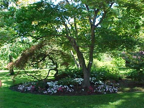Backyard Trees For Privacy  Large And Beautiful Photos