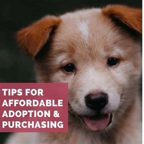 dogs puppy puppies adoption dog places really dollars breed cheapest cheap pethelpful purebred cute animal animals under singapore alsatian american