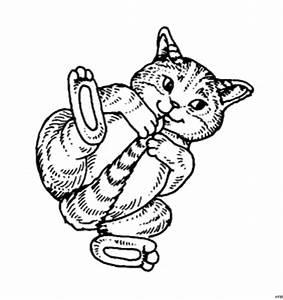 Suesse Babykatze Ausmalbild Malvorlage Tiere