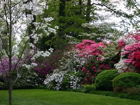 landscape screening trees beautiful privacy landscaping garden pinterest privacy landscaping landscaping and