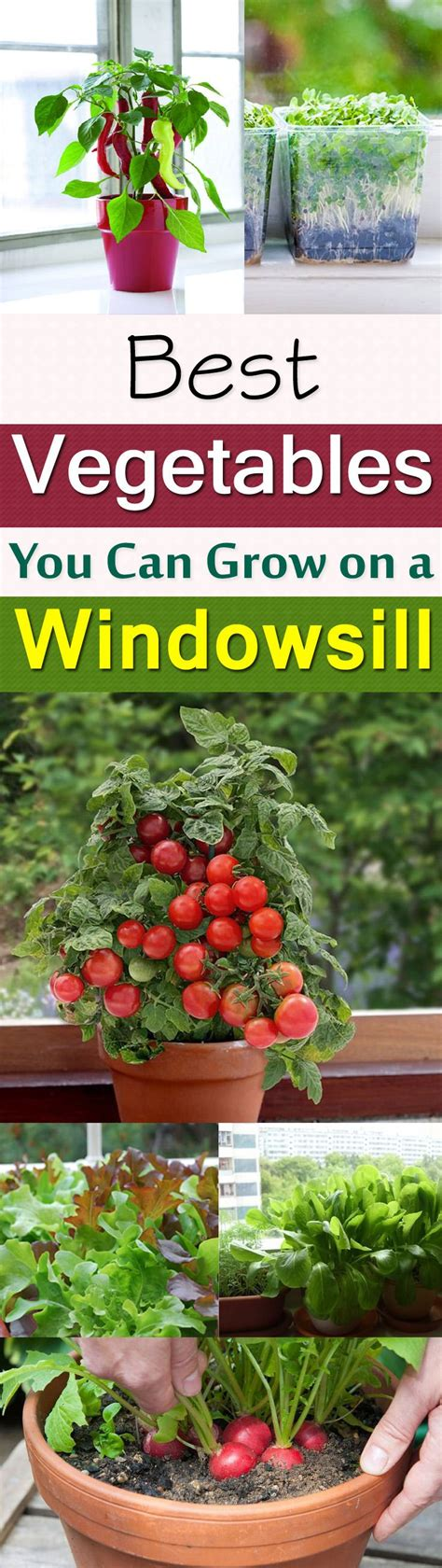 Window Sill Garden Vegetables by 11 Best Vegetables To Grow On Windowsill Vegetable