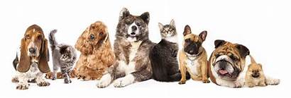 Dogs Cat Cats Dog Breeds Different Afraid