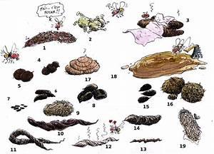 Crottes De Souris : crott 39 art jeu devine qui a fait a les coupables sont ~ Melissatoandfro.com Idées de Décoration