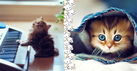 than dogs cuter cats why innfinity reasons way