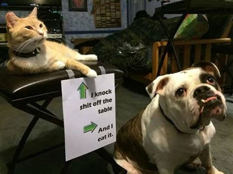 pairs  adorable animals   partners  crime part