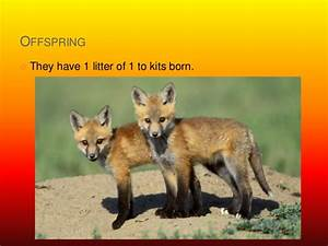 Reasons To Live Template Fox Powerpoint