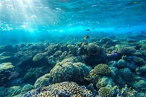 Red sea coral reef with hard corals, fishes and sunny sky ...