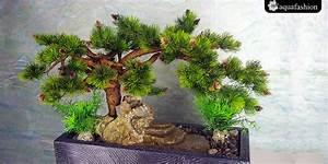 Bonsai Kaufen Berlin : bonsai 9 tischspringbrunnen mit dekorativen kiefer ~ Orissabook.com Haus und Dekorationen