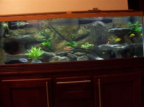 favorite backgrounds  background aquariums