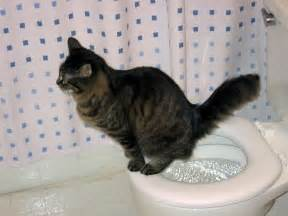 how to your cat to use the toilet now kitty can flush citikitty unveils the world s