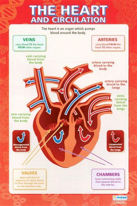 heart physical education