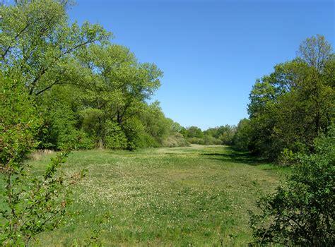 File:Prague Milicovsky Forest Meadow.jpg - Wikimedia Commons