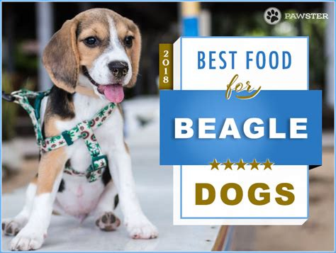 top  recommended dog foods   beagle