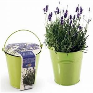Lavendel Pflanzen Im Topf : neuheiten bei monsterzeug ~ Lizthompson.info Haus und Dekorationen