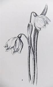 Set of 3 Vintage prints of flowers - Botanical ...