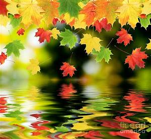 Beautiful, Colorful, Leaves, Photograph, By, Boon, Mee