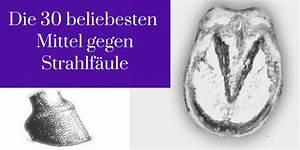Mittel Gegen Wespen Im Rolladenkasten : die 30 beliebtensten mittel gegen strahlf ule ~ Frokenaadalensverden.com Haus und Dekorationen