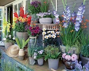 Bulbes D été : collection 39 balcon fleuri 39 31 bulbes d 39 t willemse ~ Melissatoandfro.com Idées de Décoration