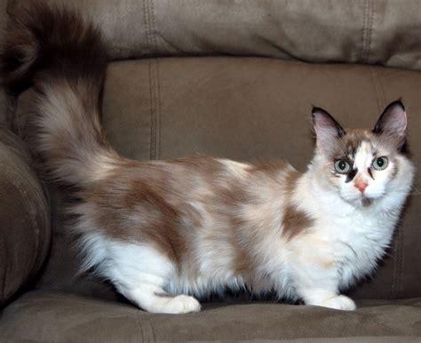 Rug Hugger Breeders by The Munchkin Cat Bioventures