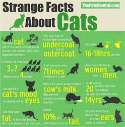 17 interesting facts about cats cristina s ideas