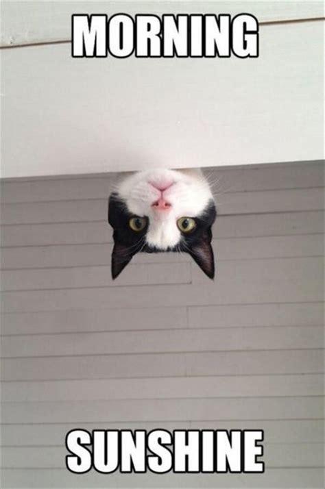 Morning Cat Meme Morning Cat Dump A Day