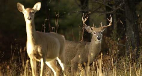 Does It Help Or Hurt Deer Hunting?