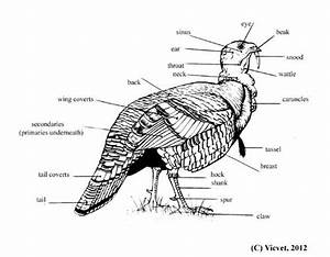 29 Best Bird Identification D U2019oiseaux Images On Pinterest