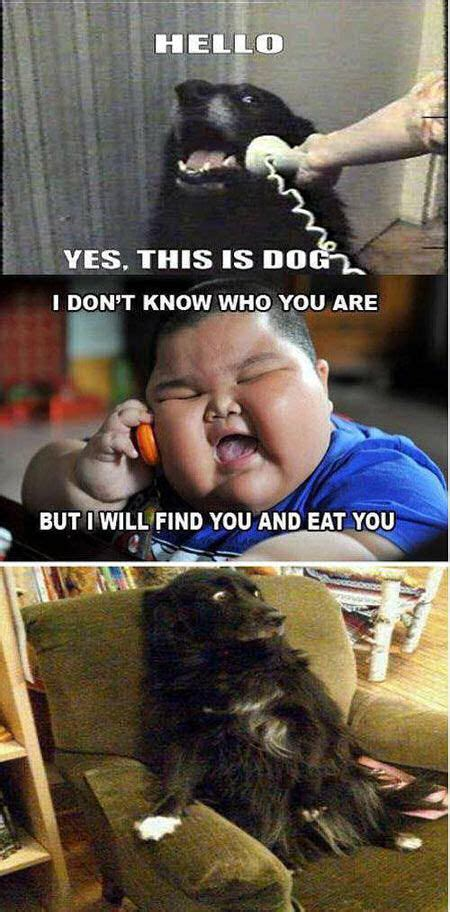 Asian Dog Meme - hello yes this is dog pictures photos and images for facebook tumblr pinterest and twitter