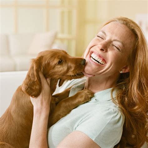 Letting Your Dog Lick Your Face Could Harm Your Health Experts Warn