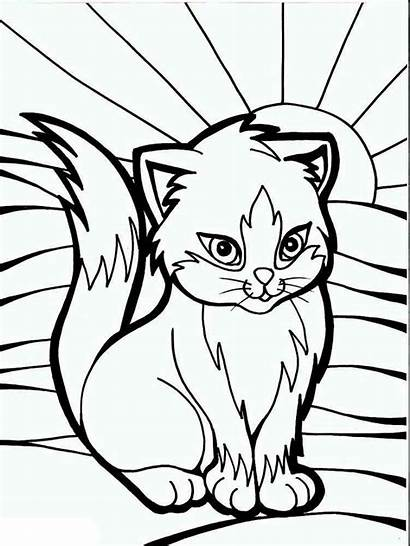 Coloring Cats Pages Animals Printable Cat Breeds