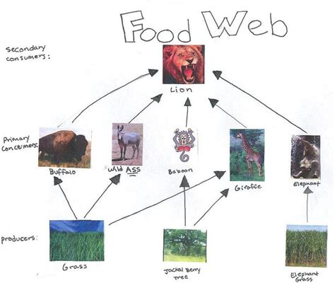 web cuisine grassland ecosystem food chain imgkid com the
