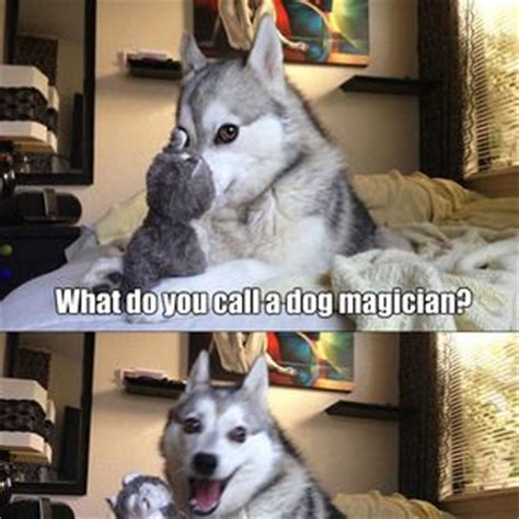 Dog Pun Meme - 17 best images about puns on pinterest animal puns funny husky and husky