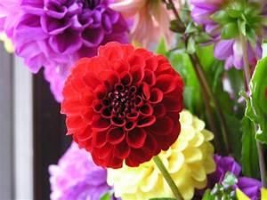 Blumenarten Az Mit Bild : blumenarten mit bild die sch nsten einrichtungsideen ~ Whattoseeinmadrid.com Haus und Dekorationen