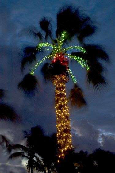 christmas decorations led tree from love actully 1000 images about palm trees on trees pink flamingos and lighted trees