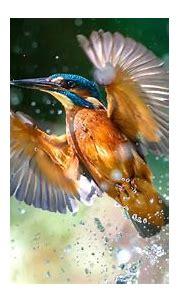 Download Bird, flight, water splashes, kingfisher ...
