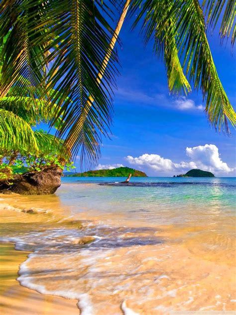 shore palms tropical beach  hd desktop wallpaper