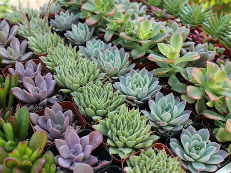 How to Grow Healthy Succulent Plants   World of Succulents