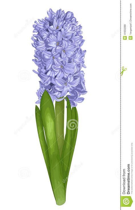 beautiful purple hyacinth   effect   watercolor