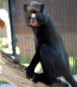 Baton Rouge Zoo monkeys killed after pack of dogs break ...