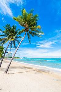 Bilder Von Palmen : strand mit palmen download der kostenlosen fotos ~ Frokenaadalensverden.com Haus und Dekorationen